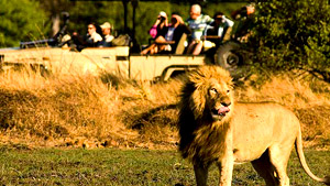 Chobe-Game-Drive.jpg (37 KB)