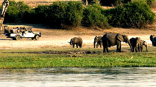 Elephant-Hills-All-Safari-Chobe.jpg (86 KB)