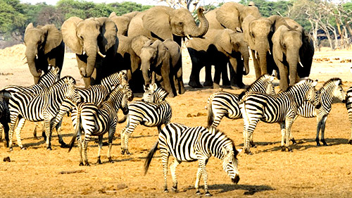 Elephant-Hills-All-Safari-Hwange.jpg (99 KB)